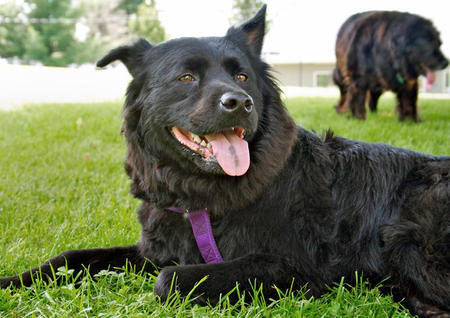 Gidget the Mixed Breed Pictures 381679