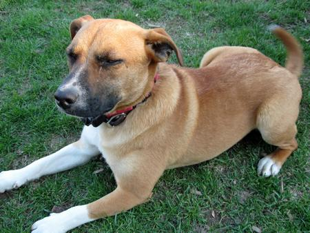 Chance the Mixed Breed Pictures 298763
