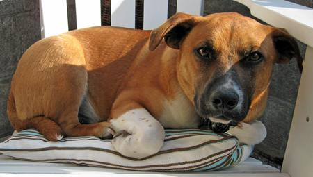 Chance the Mixed Breed Pictures 298761