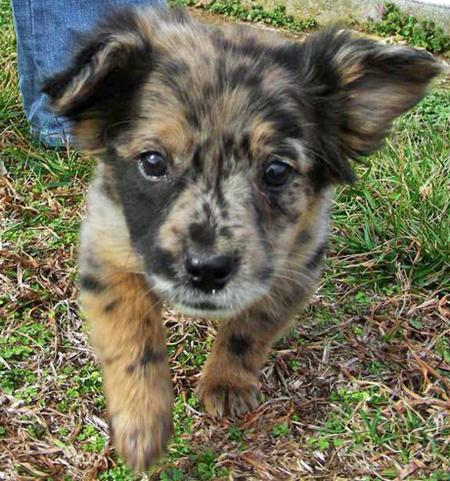 Toad the Cattle Dog Mix Pictures 54416