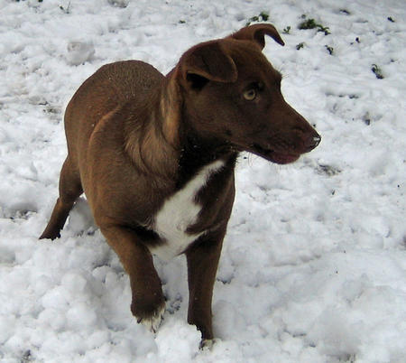Adrea the Mixed Breed Pictures 328518