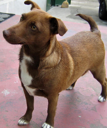 Adrea the Mixed Breed Pictures 328526
