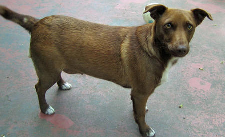Adrea the Mixed Breed Pictures 328525