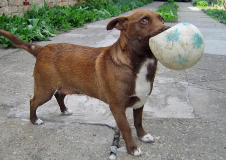 Adrea the Mixed Breed Pictures 328524