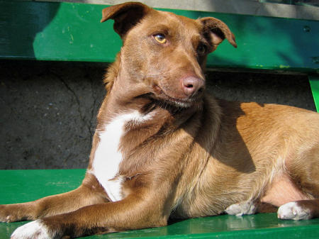 Adrea the Mixed Breed Pictures 328522