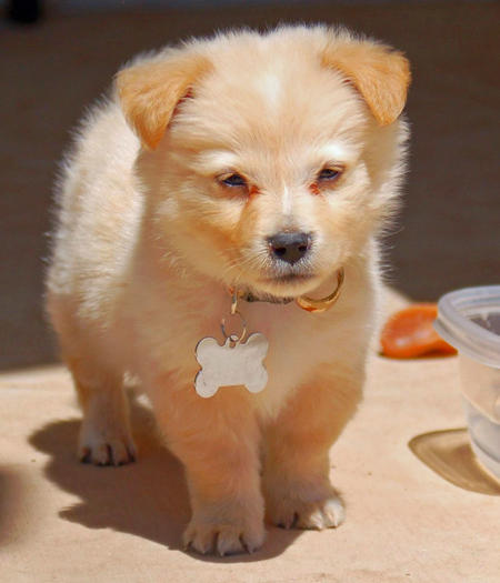 Best Mini Mixed Breed Dogs