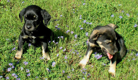 Mark & Nosey the Adoptable Puppies Pictures 320452