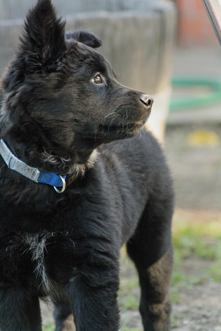 Kada the Mixed Breed Pictures 304504