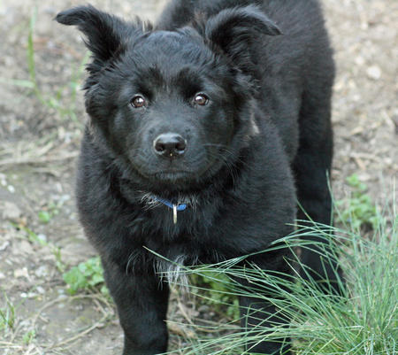 Kada the Mixed Breed Pictures 304500