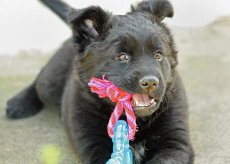 Kada the Mixed Breed Pictures 304499