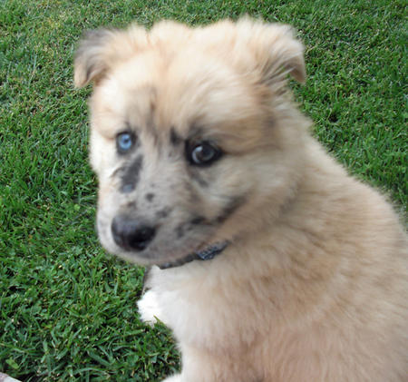 Nalu the Mixed Breed Pictures 310816