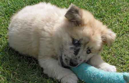 Nalu the Mixed Breed Pictures 310814