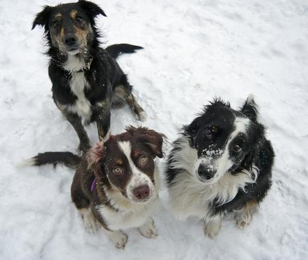 Zappa the Border Collie Mix Pictures 217012