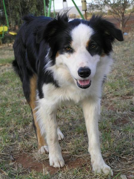 Sally the Border Collie Pictures 336096