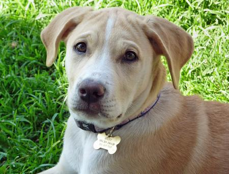 Miley the Retriever Mix Pictures 367738
