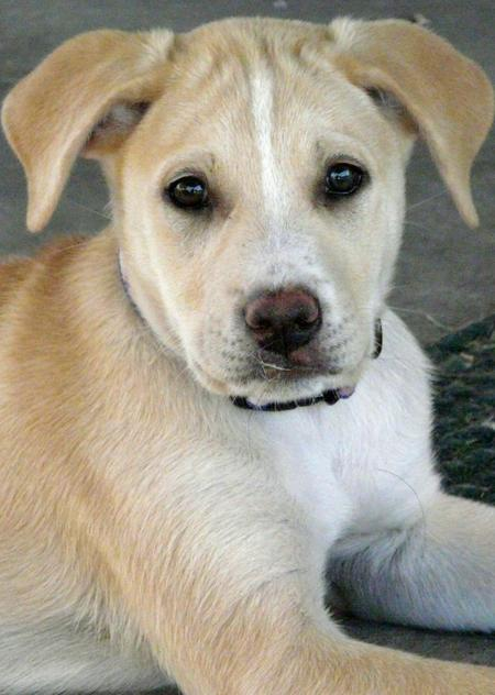 Miley the Retriever Mix Pictures 367734