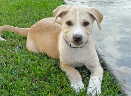 Miley the Retriever Mix Pictures 367731