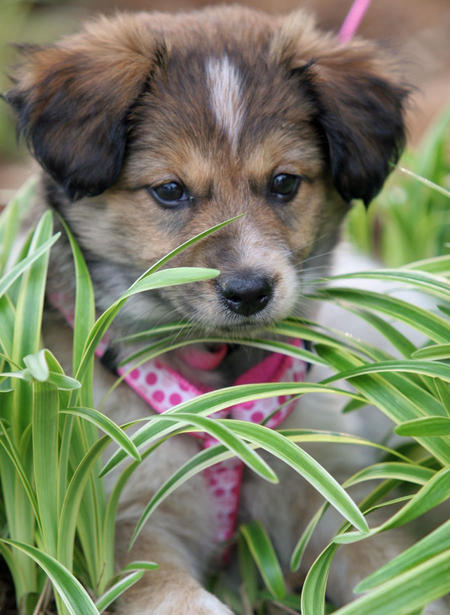 Lizzie the Mixed Breed Pictures 376492
