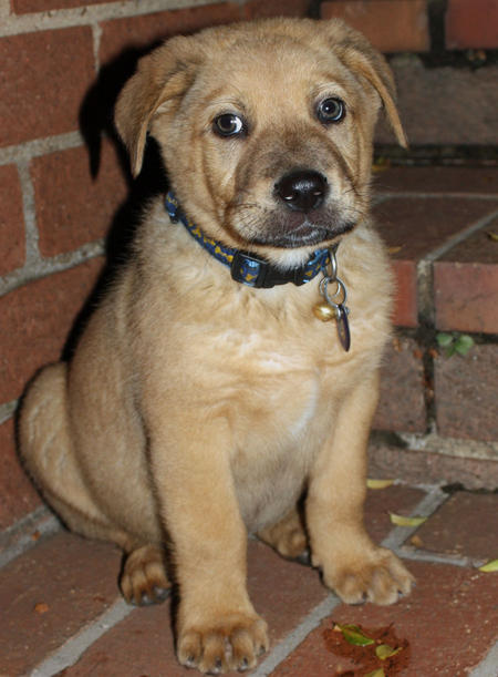 Charlie the Mixed Breed Pictures 373745