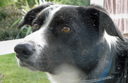 Robbie the Border Collie Mix Pictures 375510