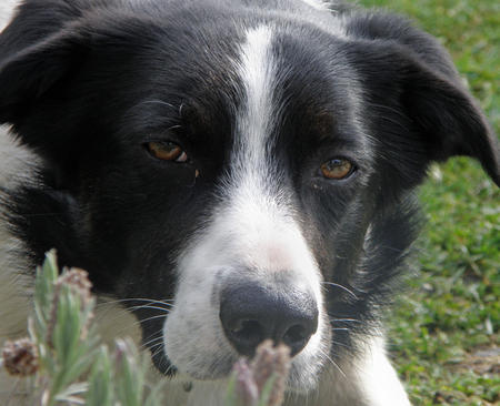 Robbie the Border Collie Mix Pictures 375509