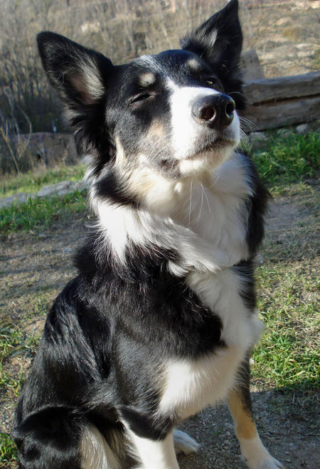 Lluvia the Border Collie Pictures 383187