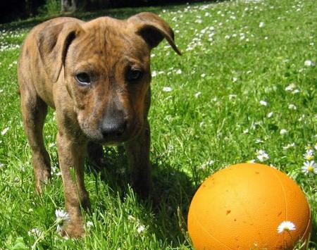 Diesel the Mixed Breed Pictures 407259