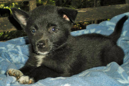 Tuxedo the Adoptable Puppy Pictures 402236