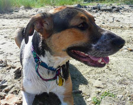 Holly the Hound Mix Pictures 208918