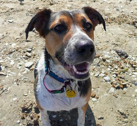Holly the Hound Mix Pictures 208917