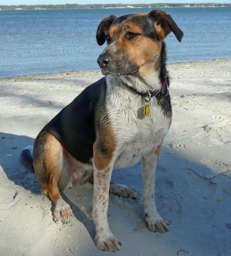 Holly the Hound Mix Pictures 208923