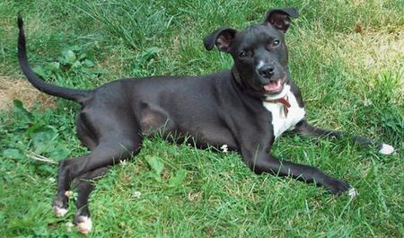 Scout the Terrier Mix Pictures 70470