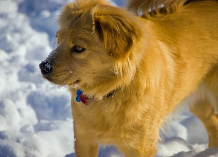 Beaker the Chow Mix Pictures 212424