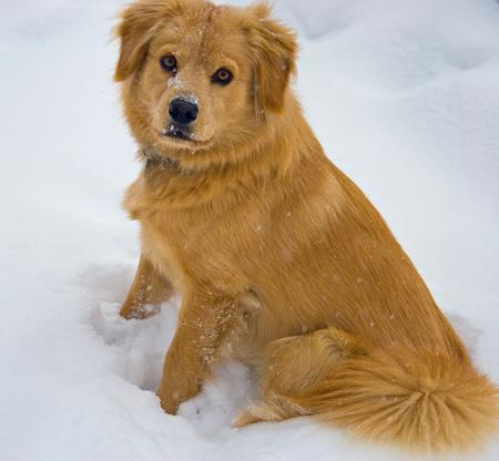 Beaker the Chow Mix Pictures 212420