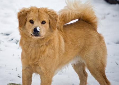 Beaker the Chow Mix Pictures 212418