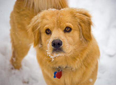 Beaker the Chow Mix Pictures 212419