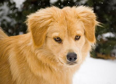 Beaker the Chow Mix Pictures 212417