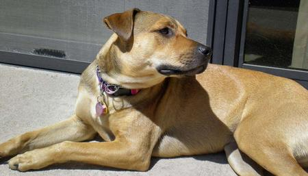 Layla the Mixed Breed Pictures 279600