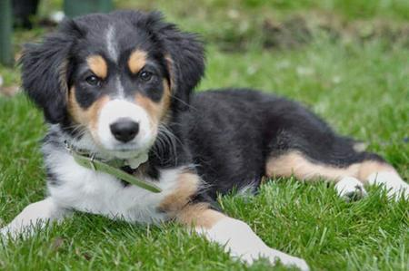 Daisy May the Mixed Breed Pictures 82716