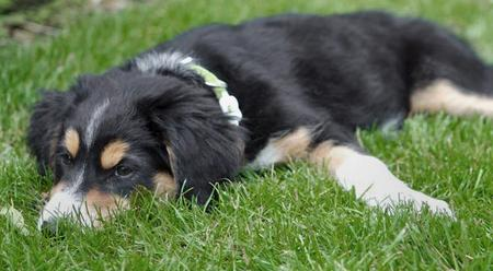 Daisy May the Mixed Breed Pictures 82719