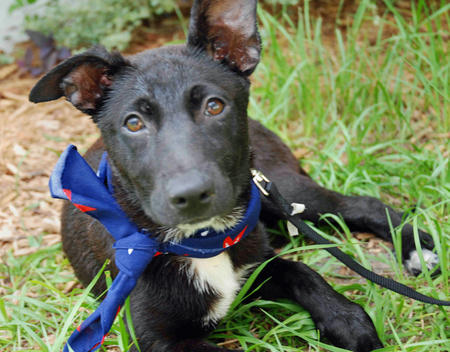 Lynn the Adoptable Grown-up Puppy Pictures 104149