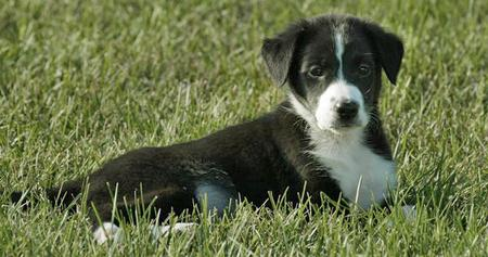 Sadie Grace the Border Collie Mix Pictures 105227