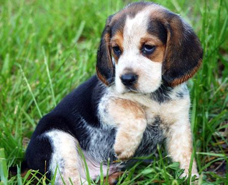 Cutie! Pictures 5