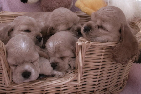 A Bushel o' Puppies Pictures 32