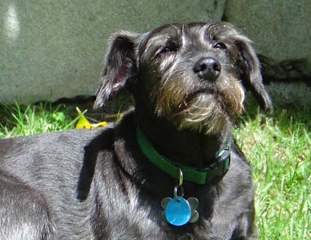 Grommet the Terrier Mix Pictures 3254