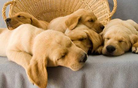 Jade's Puppies Pictures 1847