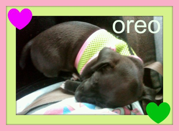 Oreo Pictures 442