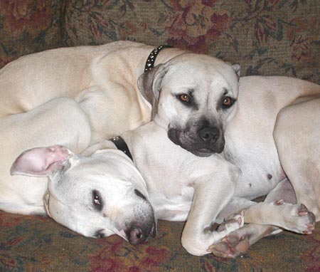 Spanky and Darla Pictures 4219