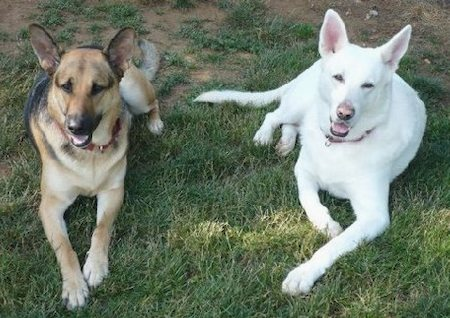 Talon and Tundra Pictures 7721